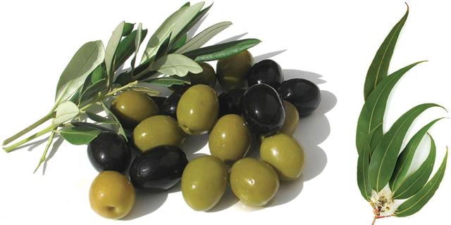 L'huile d'olive et l'huile d'eucalyptus favoriseraient la guérison ...